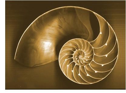 Nautilus, proporciones áureas
